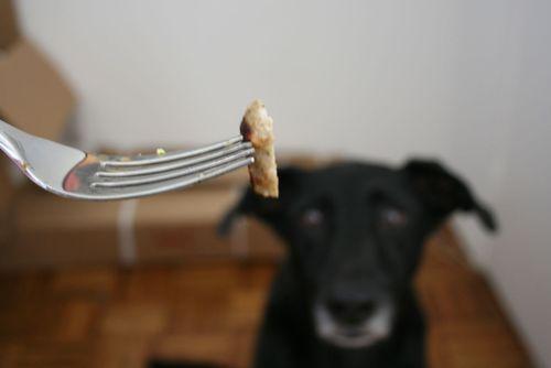 Nina no food